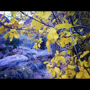 Syncline Loop Trail:  Fall Colors
