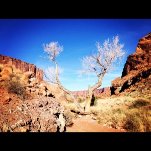 Syncline Loop Trail:  Beauty